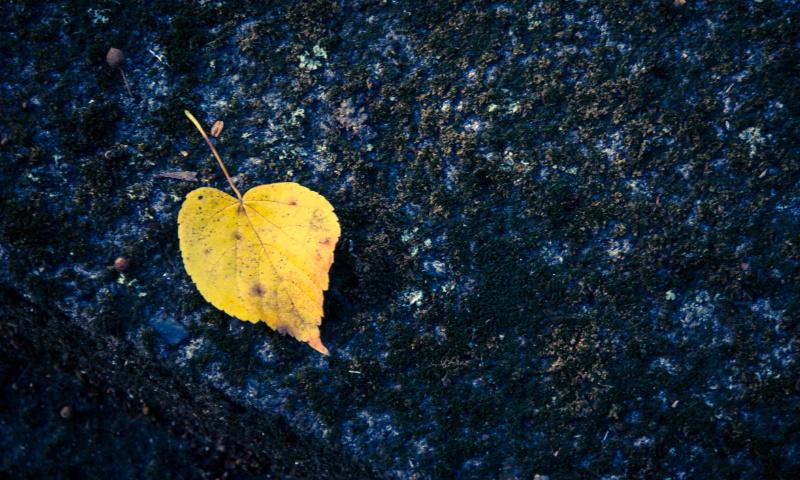 Herzförmiges Blatt