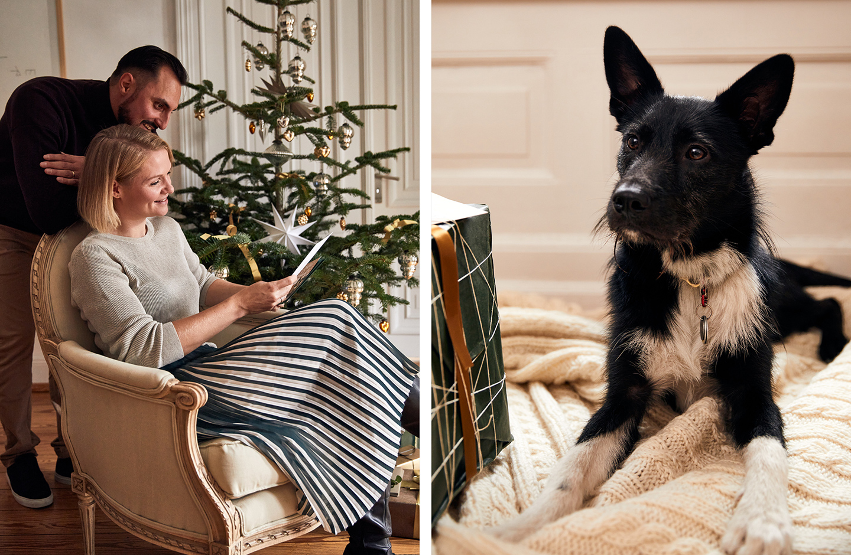 Weihnachtscheckliste: Verliebtes Paar liest Weihnachtspost und der Hund ist neugierig.