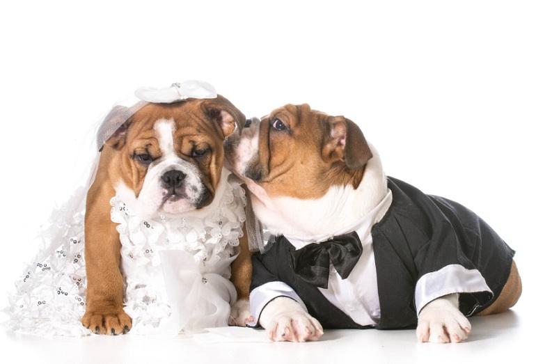 Diy Hochzeit Alternative Ringkissen Witzige Ringtrager